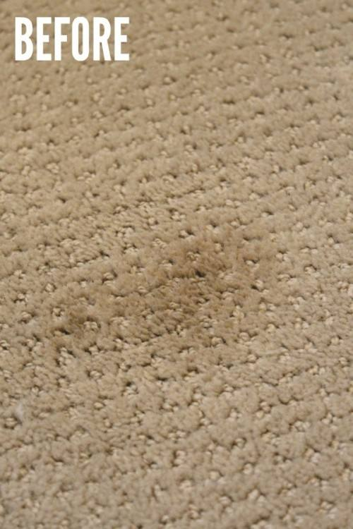 Carpet Tiles – are gaining popularity with pet owners, when your pet has an  accident you can simply pick up the tile and replace it