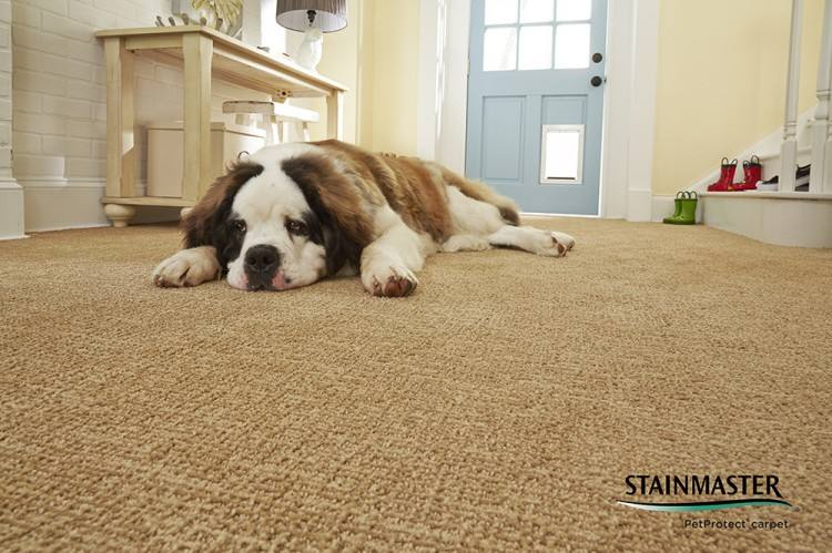 Depending on how you feel about footprints and vacuum marks, there are a  many choices of carpet that might suit you